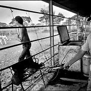LOS LLANOS.Libertad, Barinas State - Venezuela 2002.(Copyright © Aaron Sosa)..Una de las hermosas regiones que posee Venezuela, est· conformada por los Llanos, extensas sabanas que se pierden en el horizonte, donde la vegetaciÛn y la fauna tan variada, son de una belleza ˙nica y sobrecogedora. Sus inmensas tierras poseen una cantidad de ecosistemas que brindan la oportunidad de apreciar una diversa cantidad de paisajes y vivencias que hacen del Llano una experiencia muy gratificante para los amantes de la naturaleza...Ene ste trabajo ademas de paisajes, podremos apreciar un poco de su gente, sus constumbres y el dÌa a dÌa del llanero...
