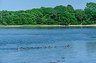 Georgica Pond, From Burnt Point, Wainscott, NY