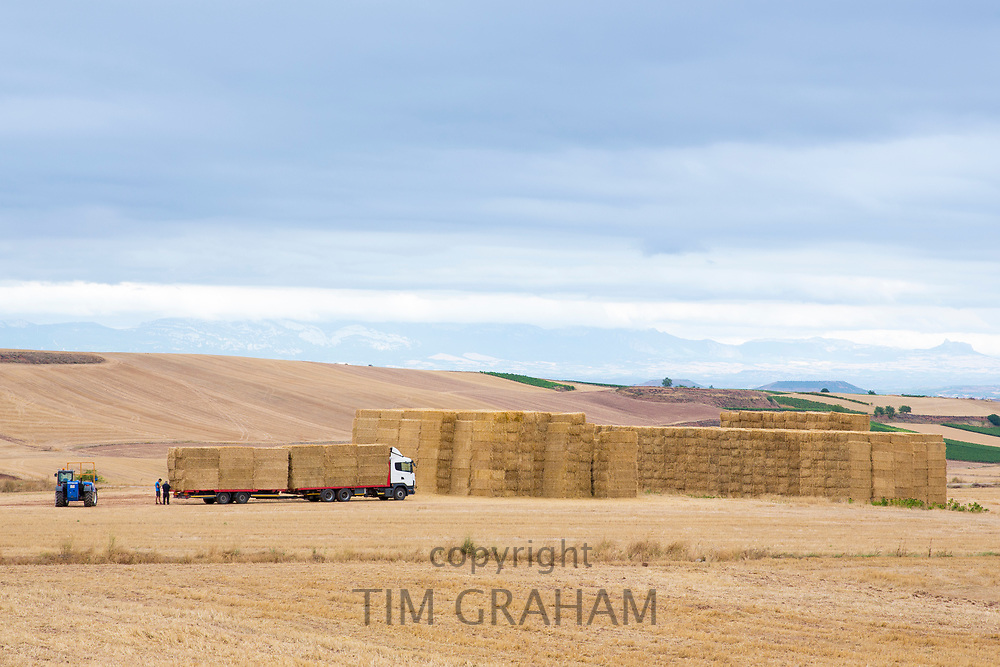 Farming scene of straw bales gathered on agricultural trailer after wheat crop in the plains of La Rioja, Spain
