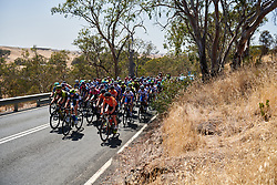 Sara Poidevin (CAN) leads the bunch on Stage 2 of 2020 Santos Women's Tour Down Under, a 114.9 km road race from Murray Bridge to Birdwood, Australia on January 17, 2020. Photo by Sean Robinson/velofocus.com
