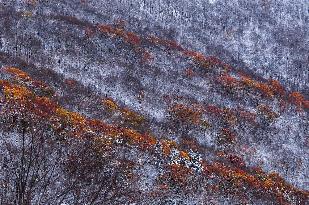 Fresh snow covers hillside of bare branches and fall color, detail shot, Petersburg, NY