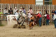 Tie down roping, cowboy, horses, Gardiner, Montana