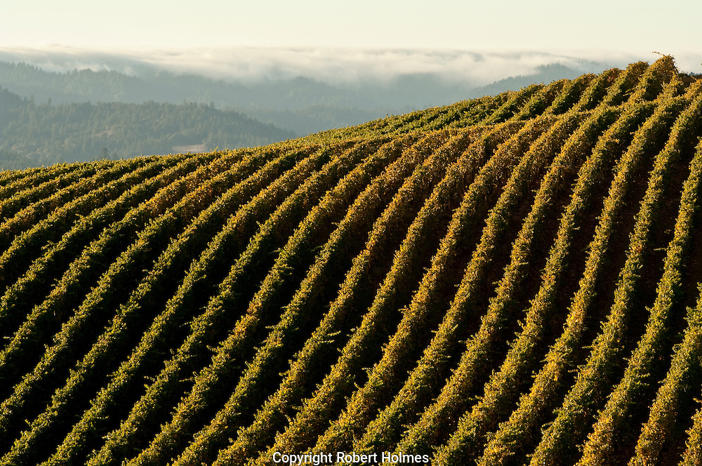 Navarro Vineyards, Anderson Valley, California
