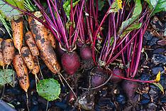 Vegetable Garden Photos
