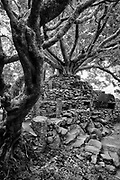 SASSERUWA temple - the Bo Tree and rock surround.