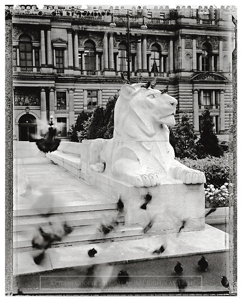 Black and white photograph of lion statue and pigeons at the cenotaph in George Square, Glasgow. Mounted print available to purchase.