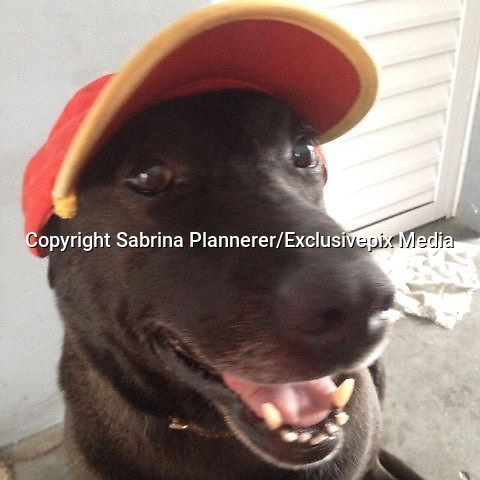 "Dog Abandoned At Gas Station Is Now Its Cutest Employee<br /> <br />  This friendly dog, named Negão, might not be your typical gas station employee — but he is certainly one of the sweetest.<br /> <br /> Sadly though, things weren't always so good for him. Two years ago, Sabrina Plannerer and her partner purchased a Shell gas station under construction in the town of Mogi das Cruzes, Brazil. It was around this time that she discovered the adult dog roaming around the site, after he'd been abandoned there by his former owner and was too frightened to leave.<br /> <br /> So, rather than try to shoo Negão away, they stepped in to help him.<br /> <br /> ""We adopted him immediately and got him all the care animals need,"" said Sabrina Plannerer . ""We took him to the vet to get vaccinated and de-wormed. We bought him food, a dog house, and a leash to take him on walks.""<br /> <br /> And when the gas station finally opened, Negão even got a job ...and an employee badge to prove it. <br /> <br /> Plannerer wasn't sure at first how Negão would react to the sudden bustle of business in the place that he'd been calling home, but the happy dog has proven to be a natural at providing world-class customer service. And he does it with a smile. ""Negão waits for people to arrive, and then goes up to say hello, winning them over with his charms,"" Plannerer says. ""Customers love him. Some people even bring him toys.""<br /> <br /> As much as the dog enjoys his job as greeter, his life isn't limited to these brief encounters. Each day, Plannerer or another employee takes Negão on walks through town for exercise. And the gas station is staffed 24/7, so there's always at least one coworker close at hand to make sure he's happy and safe.  Negão has become a poster-pup of sorts for a local initiative from the charity Grupo FERA, which aims to pair needy stray dogs with businesses in the event that they cannot find a more traditional home.<br /> <br /> ""It's been sensational, encouraging people to have more respect for animals,"" a spokesperson from Grupo FERA . ""And workers en"