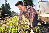 2016 Side Yard Harvest