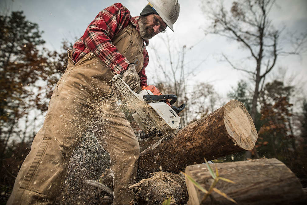 A Logger using a Stihl chainsaw to cut timber