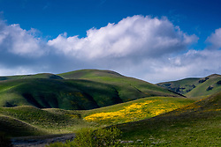March 27, 2019 - Gorman, California, U.S. - A patch of wildflowers blooming in Gorman, CA March 28, 2019.  Heavy winter rains have brought a wildflower  ''Superbloom'' to much of Southern California. (Credit Image: © David Crane/SCNG via ZUMA Wire)
