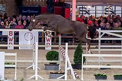 049, Robijn Van D'Abelendreef<br /> BWP Hengstenkeuring -  Lier 2020<br /> © Hippo Foto - Dirk Caremans<br />  17/01/2020