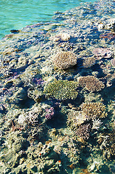 Corals line the edge of a deep hole in Turtle Reef, Talbot Bay.