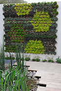 RBC Blue Water Roof Garden green wall<br /> <br /> Sponsored by Royal Bank of Canada<br /> <br /> Gold medal winner<br /> Designed by Professor Nigel Dunnett &amp; The Landscape Agency<br /> Built by Landform Consultants