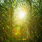 Sun shines through tall grasses and plants in Montezuma, New Mexico.