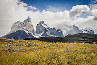 The Cuernos del Paine and Mont Almirante Nieto with the remnants of burnt trees rising above the long grass - Torres del Paine, Chile.