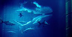 Sammy The Whale Dubai
