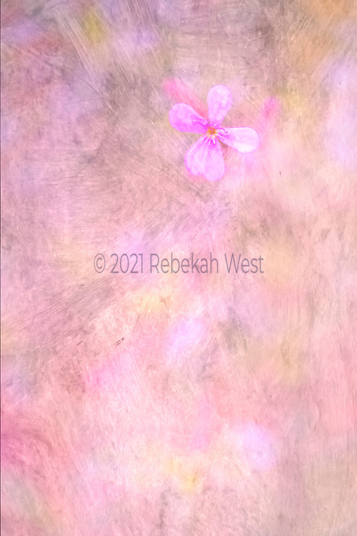 luminscent, water color like feel, single five petal flower upper right corner, whites, pale yellows, greys, grays, soft purpole, rose, whites, flower art, feminine, high resolution, licensing, iridescent, 3744 x 5616