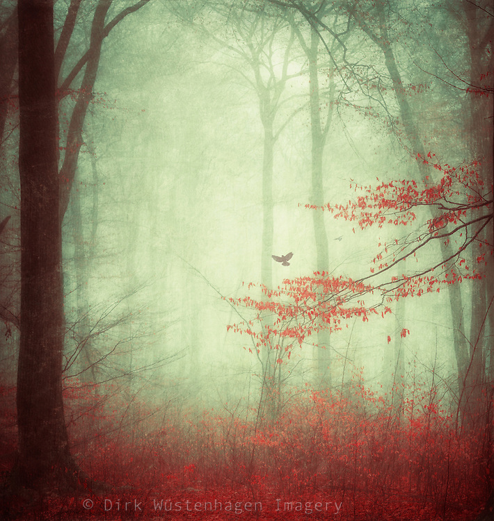 Forest scene in fog<br />