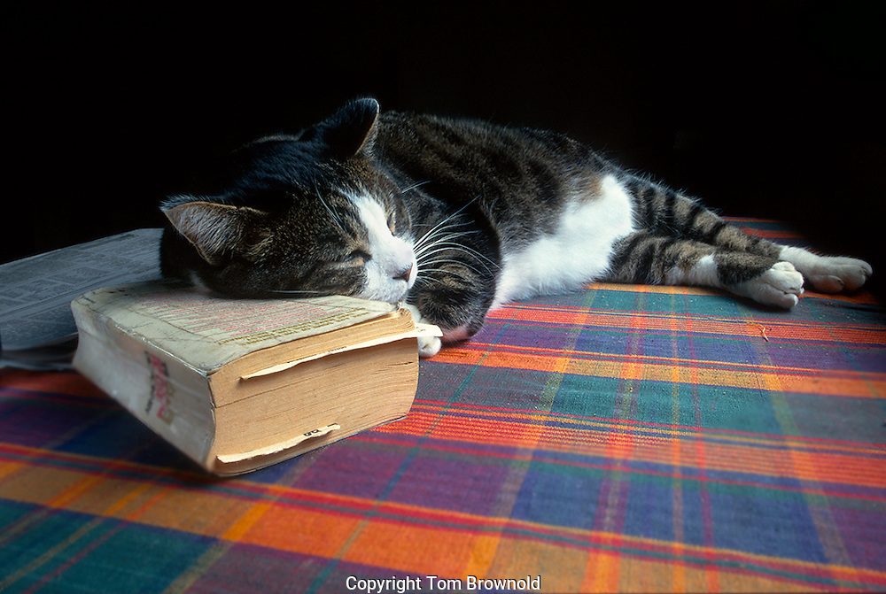 At peace with the world a sleeping cat on the table using a dictioinary for a pillow