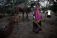Nomad Santra Banjara, aged 25, poses for a portrait with a borrowed solar lantern next to her camel in the nomadic village, Banjara Ki Dhani. Ancestrally known as rich salt merchants, until commercially packaged salt was available in the market, they now work as daily wage labourers in nearby agricultural fields. Three years ago, when the Barefoot College in Tilonia, Ajmer, Rajasthan, India, had come to sell solar panels and lanterns to them at INR 1000 per set, Santra's family were skeptics of the solar technology. Since then, they have been borrowing a solar set from the village school. Today, they have ordered a set from the Barefoot College for themselves. Photo by Suzanne Lee for Panos London