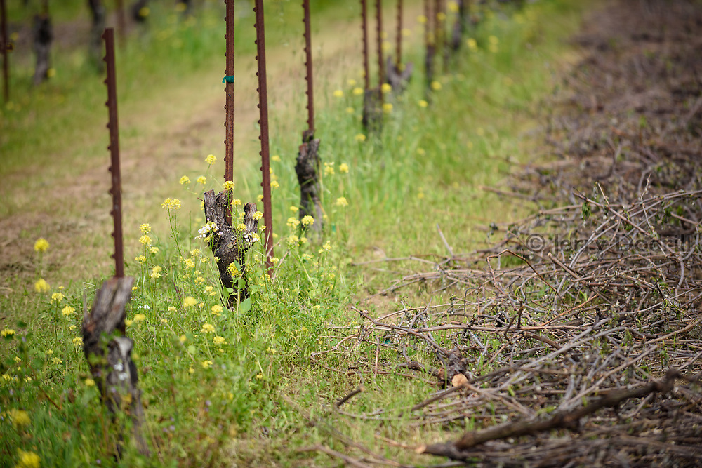 Vineyard removal, Square Peg Winery