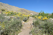 Tahquitz Canyon Trail