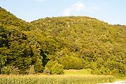 Naturschutzgebiet Donauleiten, Donau, Bayerischer Wald, Bayern, Deutschland | nature reserve Donauleiten, Danube, Bavarian Forest, Bavaria, Germany