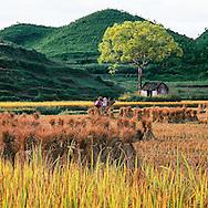 Vietnam Images-Landscape-Nature- phong cảnh việt nam -hoàng thế nhiệm