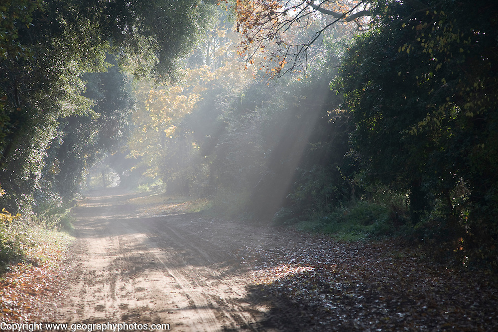 Shaft sunbeam light shining on path of unsealed rural road, Sutton, Suffolk Sandlings, England