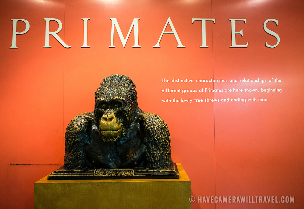 Primates exhibit at the Museum of Natural History in New York's Upper West Side neighborhood, adjacent to Central Park.