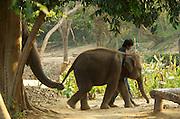 Muang SIng Elephant Village, Kanchanaburi, Thailand