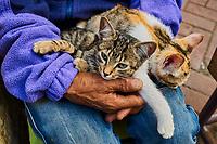 Maroc, Tanger, chat dans la Medina // Morocco, Tangier (Tanger), cat on the Medina (old city)