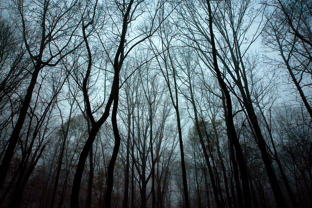 Moody winter forest.