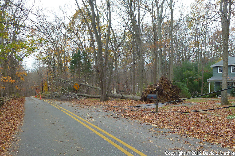 Hurricane Sandy Aftermath in Skillman New Jersey Day 3. Image taken with a Leica V-Lux 30 camera.