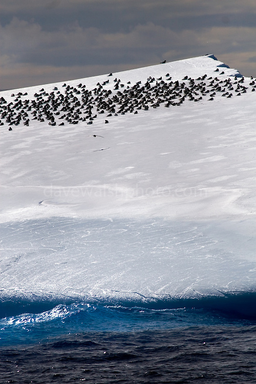 Iceberg, Antarctica, with birds resting on it