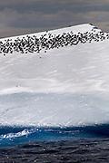 Iceberg, Antarctica, with birds resting on it