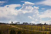 Monsoon thunderstorms build up over the Kaibab National Forest between Jacob Lake and the North Rim of Grand Canyon National Park. This section of highway 67 passes through an area burned by a forest fire.