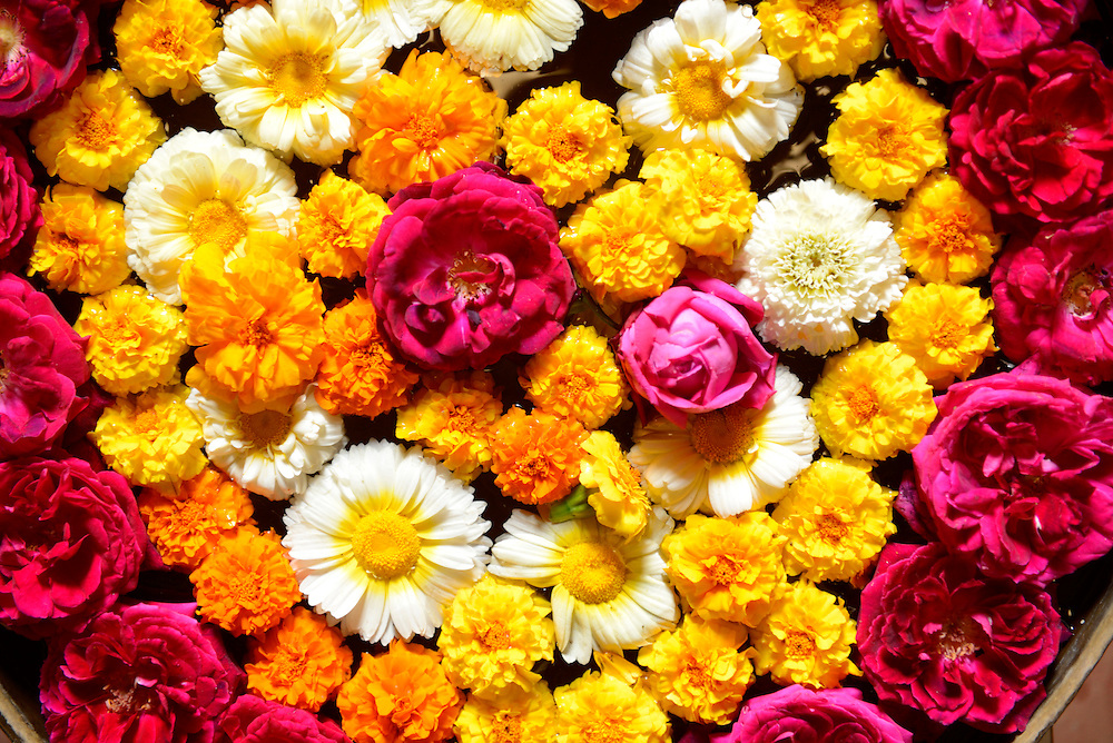 Flowers,offerin,City of Bundi, Rajasthan,India,Asia