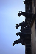 Gargoyles on St. Vitus's Cathedral in Prague Castle, Prague, Czech Republic. The castle, first constructed in the 10th century is the seat of government in the Czech Republic.
