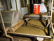 Once the canola seed has been run through the first crush and the virgin canola oil has been extracted, it is heated, compressed, turned into small pellets and then run through an extraction process to remove the remaining oil.  The byproduct is used for cattle feed.