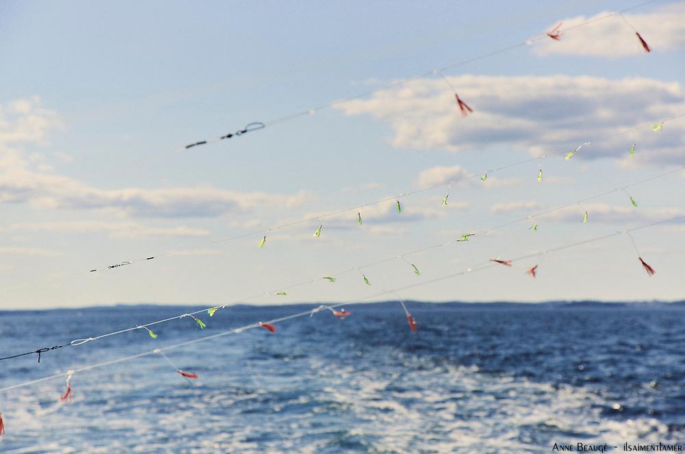 Maquerels fishing , Nova Scottia Canada