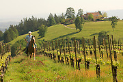 Equestrian wine tours, Dundee Hills, Willamette Valley, Oregon