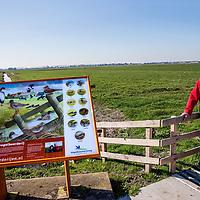 Nederland, Amstelveen, 27 maart 2017.<br /> Het gaat slecht met de weidevogel ondanks alle inspanningen.<br />Sinds 1960 is het aantal boerenlandvogels met 60 tot 70 procent teruggelopen. Het aantal patrijzen, zomertortels, ringmussen is gedecimeerd en van de grutto&rsquo;s is tweederde verdwenen. Sommige vogelsoorten komen in grote delen van Nederland bijna niet meer voor blijkt uit cijfers van het Centraal Bureau voor de Statistiek. (CBS) Deze achteruitgang kan volgens CBS niet los worden gezien van de intensivering van de landbouw. <br />Op de foto: Boer Kees Lambalk aan de Ringdijk 26 in Amstelveen heeft in het voorjaar de zorg over zo&rsquo;n zestig nesten op zijn land in de Bovenkerkerpolder.<br /><br /><br /><br /><br /><br />Foto: Jean-Pierre Jans