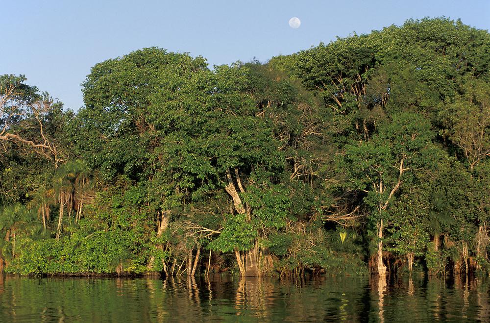 Along Rio Negro,Amazon River Basin,Manaus,Brazil