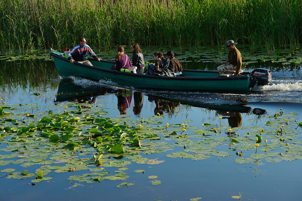 Tourism in the delta, boat trip, Danube delta rewilding area, Romania