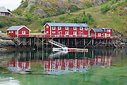 A red rorbu fishing lodge on stilts reflects in Reinefjord, Moskenesøya (the Moskenes Island), in the Lofoten archipelago, Nordland county, Norwegian Sea, Norway.