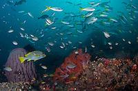 Plethora of Reef Fish