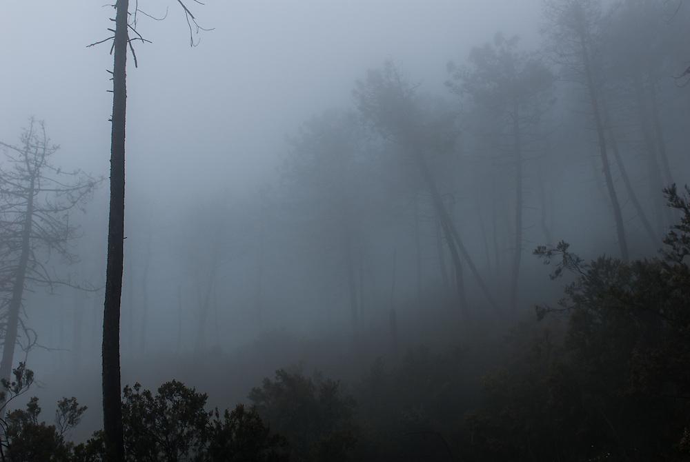 Mist blankets La Cinque Terra National Park, Italy