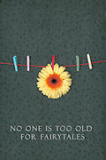 one gerbera and five clothes-pegs
