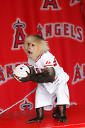 ANAHEIM, CA - APRIL 22:  The Los Angeles Angels of Anaheim rally monkey makes an appearance at Fan Fest prior to the game against the Baltimore Orioles on Sunday, April 22, 2012 at Angel Stadium in Anaheim, California. The Orioles won the game 3-2 in ten innings. (Photo by Paul Spinelli/MLB Photos via Getty Images)